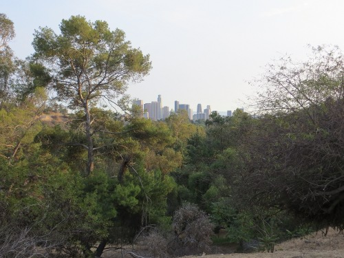 Elysian Park, Echo Park in Los Angeles
